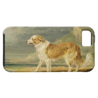Rough-coated Collie, 1809 (oil on board) iPhone 5 Cover