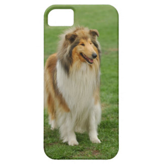 Rough Collie Case For The iPhone 5