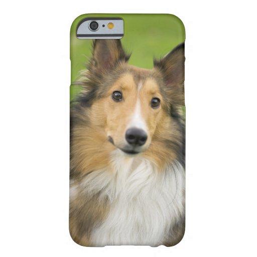 Rough Collie, dog, animal iPhone 6 Case