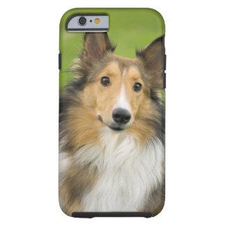 Rough Collie, dog, animal Tough iPhone 6 Case