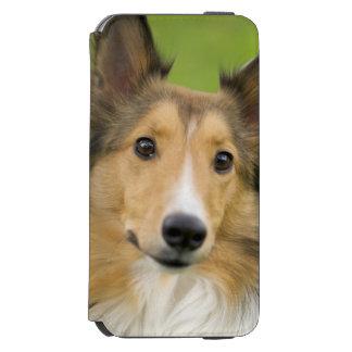 Rough Collie, dog, animal Incipio Watson™ iPhone 6 Wallet Case