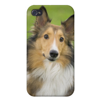 Rough Collie, dog, animal iPhone 4 Case