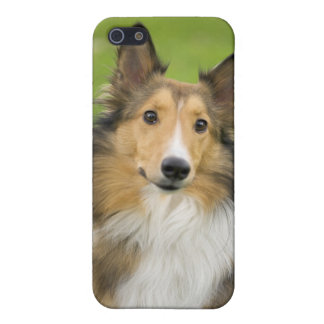 Rough Collie, dog, animal iPhone 5/5S Cases
