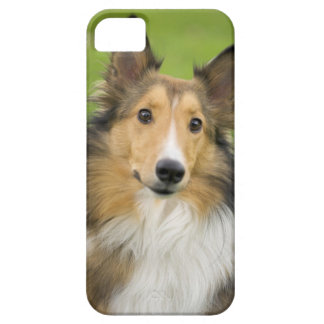 Rough Collie, dog, animal iPhone 5 Cover