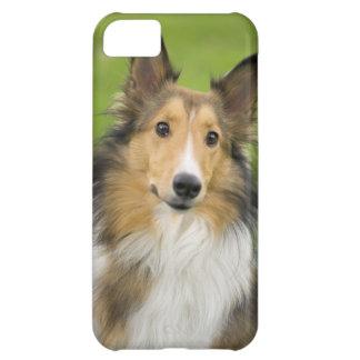 Rough Collie, dog, animal iPhone 5C Case