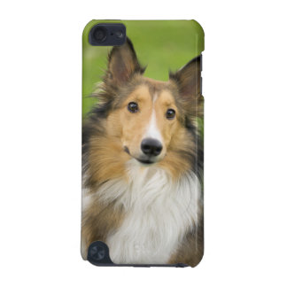 Rough Collie, dog, animal iPod Touch (5th Generation) Covers
