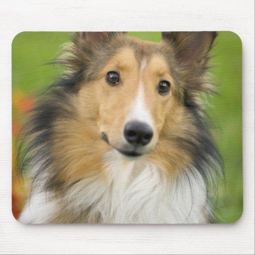 Rough Collie, dog, animal Mousepad