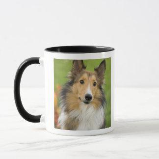 Rough Collie, dog, animal Mug