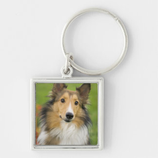 Rough Collie, dog, animal Silver-Colored Square Key Ring
