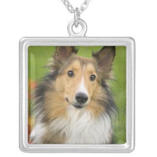 Rough Collie, dog, animal Square Pendant Necklace