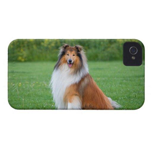 Rough collie dog beautiful blackberry bold case