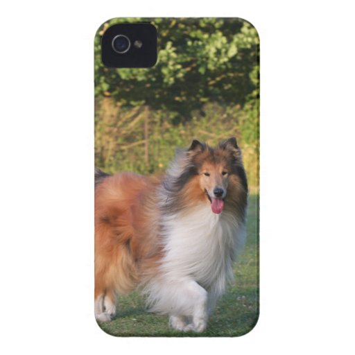Rough collie dog beautiful blackberry bold case iPhone 4 cases