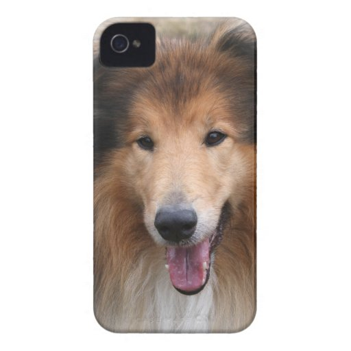 Rough collie dog beautiful blackberry bold case iPhone 4 covers