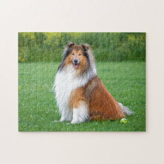 Rough Collie dog beautiful photo jigsaw puzzle
