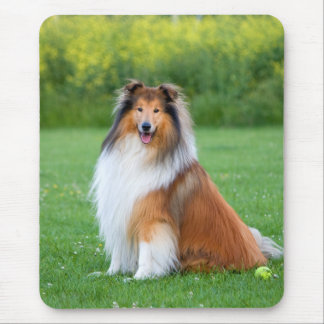 Rough Collie dog beautiful photo mousepad, gift Mouse Pad