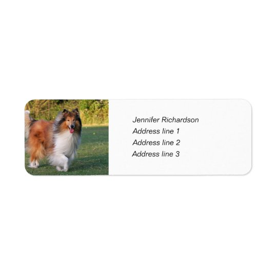 Rough collie dog custom return address labels