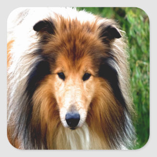 rough collie dog move to love square sticker