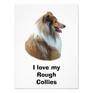 Rough Collie dog portrait photo