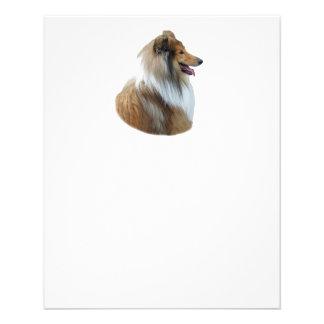 Rough Collie dog portrait photo Flyers