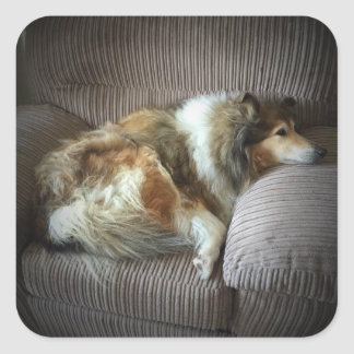 "Rough collie on armchair"" square sticker"