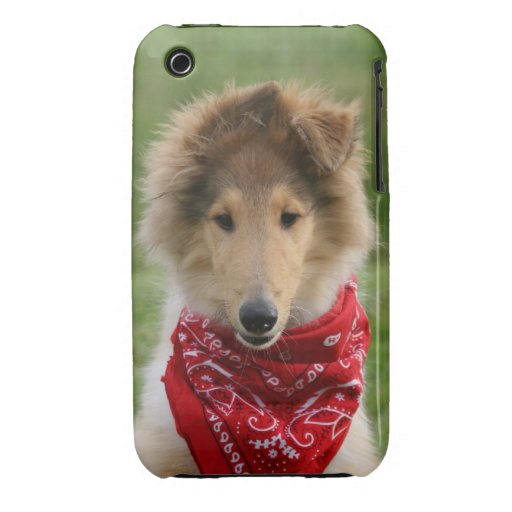 Rough collie puppy dog cute beautiful photo iPhone 3 cover