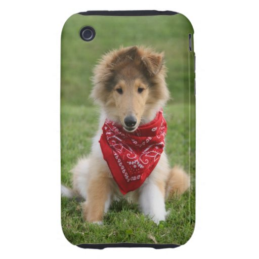 Rough collie puppy dog cute beautiful photo tough iPhone 3 case