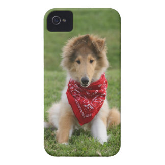 Rough collie puppy dog cute beautiful photo iPhone 4 cases