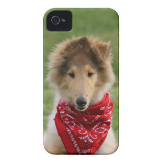 Rough collie puppy dog cute beautiful photo iPhone 4 covers