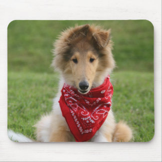Rough collie puppy dog cute beautiful photo mouse pad