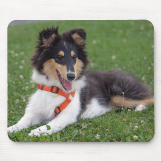 Rough collie puppy dog cute photo mousepad