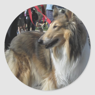 Rough Collie Sticker