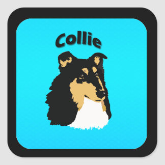 Rough Collie Turquoise Square Sticker