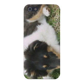 Rough Tri Collie Puppy Cover For iPhone 5/5S