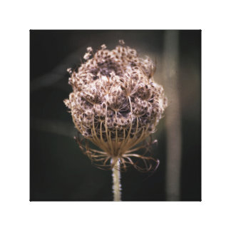 Round Dried Queen Anne Lace Plant Moody Nature Canvas Print