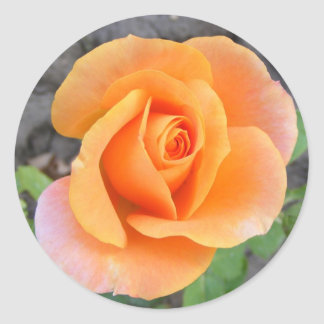 Round Sticker with orange rose