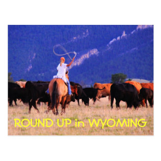 ROUND UP in WYOMING Postcard
