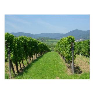 Route de Vins d'Alsace Postcard