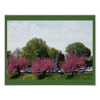 Row of Cherry Blossoms Poster
