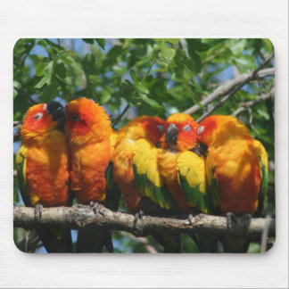 Row of Cute Little Parrots Snuggling Mouse Pad