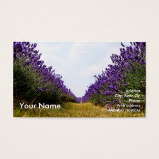 Row of Lavender Business Card2 Business Card