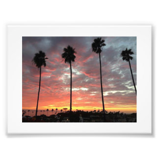 Row of Palm Trees during Sunset Photograph