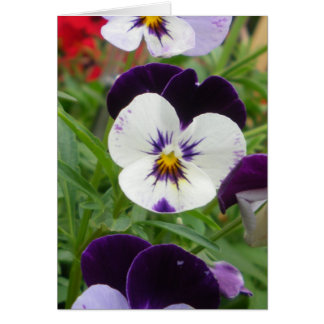 Row of Pansies Card