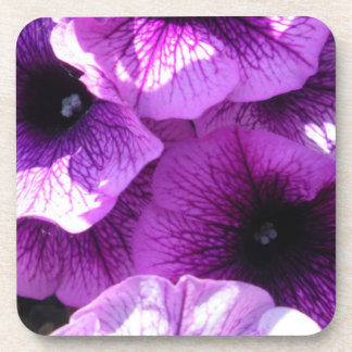 Row of Purple Wave Petunias Coaster