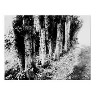 Row of Trees Black and White Poster