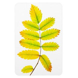 Rowan tree autumn leaves rectangular photo magnet