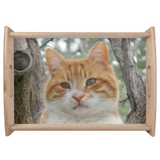 Rowdy Yellow Hair Cat Serving Tray