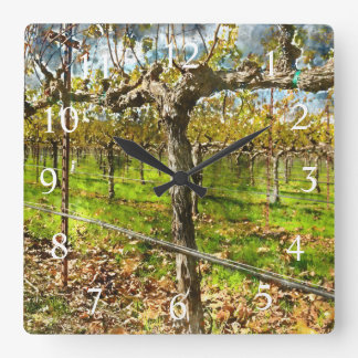 Rows of Grapevines in Napa Valley California Square Wall Clock