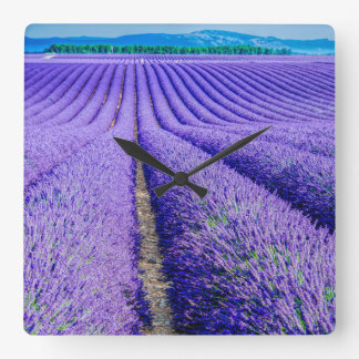 Rows of Lavender, Provence, France Square Wall Clock