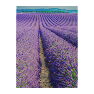 Rows of Lavender, Provence, France Wood Wall Art