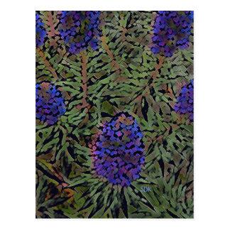 Rows of Purple California Lavender Plant Del Mar Postcard